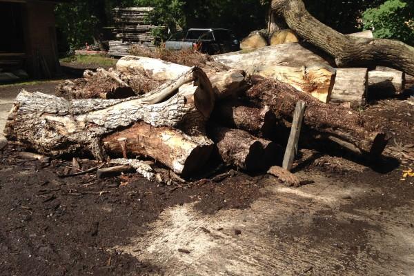 sawmill logs 1